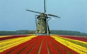 0209-NL-1992161-20130808